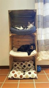 Pallet Creation for Pets
