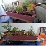 Pallet Planter Shelf